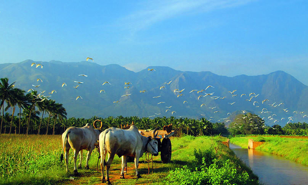 The remarkable and most picturesque Theni